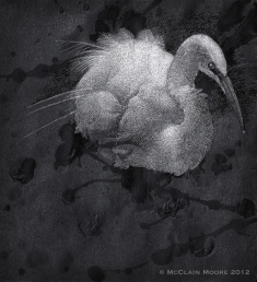 Egret Dream