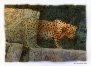 Endangered Amur Leopard