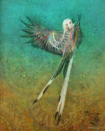 Scissor Tailed Flycatcher