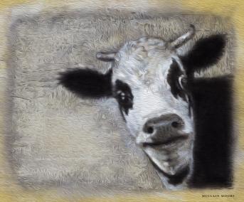 Devin Nunes's Cow