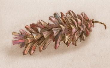 Rainbow Pinecone