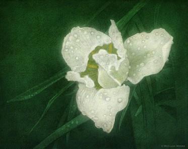 White on Green